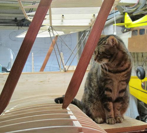 Manifestement, les chats aiment les biplans !